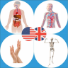 Body Parts Name and Pictures APK