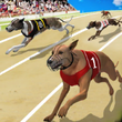 Dog Crazy Race Simulator APK