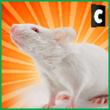 City Mouse Simulator APK