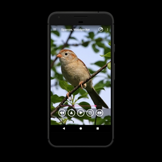 Bird Sounds APK 5 0 1 40027 - download free apk from APKSum