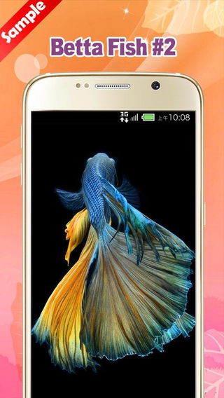 Betta Fish Wallpaper Apk Betta Fish Live Wallpaper Free Apk 1 3 5 Download For Android Download Betta Fish Live Total Update Betta fish wallpaper apk android icin