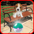 Pocket Puppy Dogs Go! APK