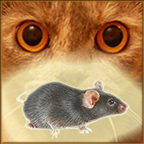 Mouse on screen for cat APK