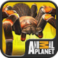 Real Scary Spiders APK