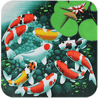 Koi Live Wallpaper Apk 1 0 1 Download Free Apk From Apksum